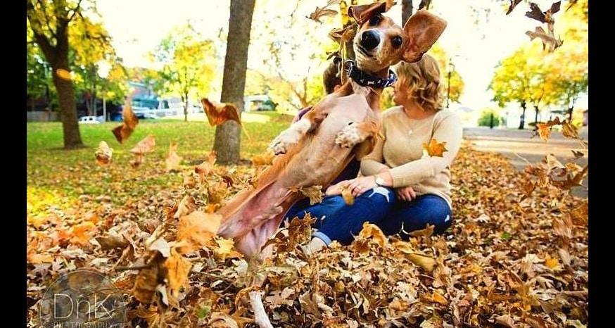 Dog Pulls Off Epic Engagement Photobomb