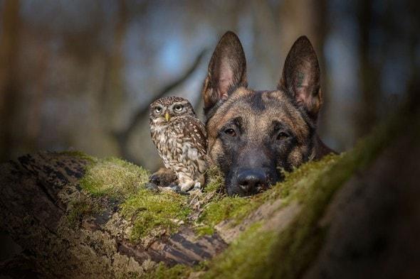 10.25.15 - Owl Bestie1.1