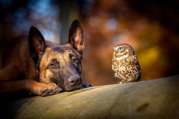 10.25.15 - Owl Bestie10