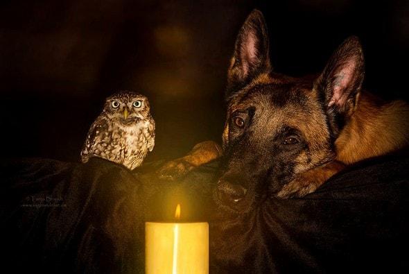 10.25.15 - Owl Bestie5