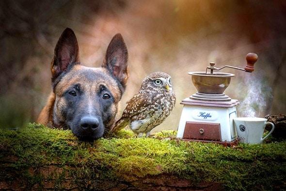 10.25.15 - Owl Bestie7
