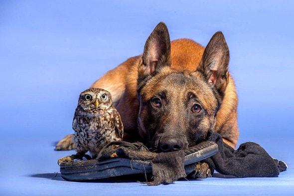 10.25.15 - Owl Bestie9