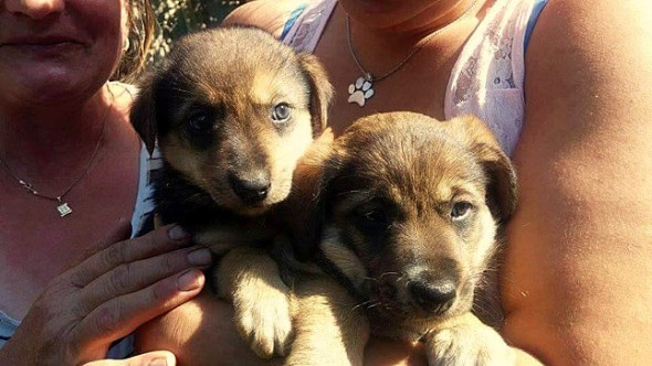 10.25.15 - The Amazing Rescue of a Bosnian Street Dog and Her Puppies2
