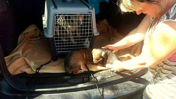 10.25.15 - The Amazing Rescue of a Bosnian Street Dog and Her Puppies3