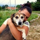 Drivers Stop Their Car on Bosnian Highway to Give a Dog the Rescue of a Lifetime