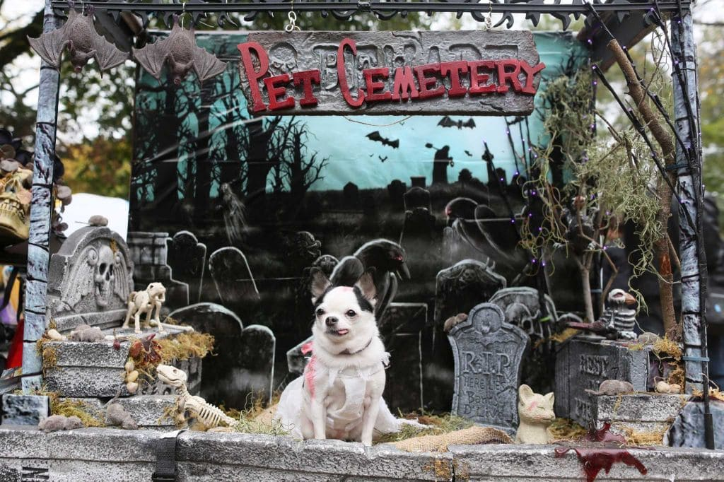 25th Annual NYC Halloween Dog Parade