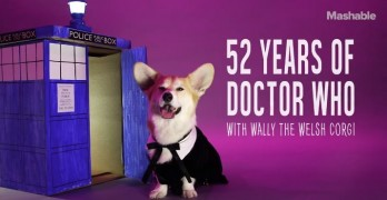 Corgi Dresses Up as all 13 Doctors from Doctor Who