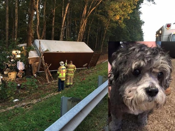 ems worker adopts dog that lost human in truck accident