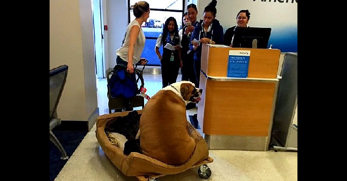 Service Dog Treated Like Royalty on First Class Flight