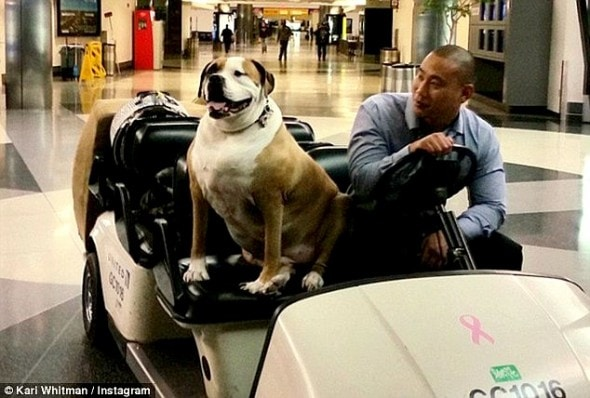 10.28.15 - Support Dog Treated Like Royalty on First Class Flight4