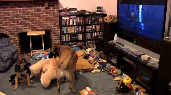 10.29.15 - Dog Is Obsessed with Favorite Movie - Bolt2