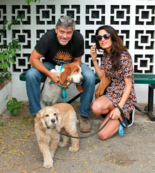 10.29.15 - George & Amal Clooney Adopt Rescue Dog1