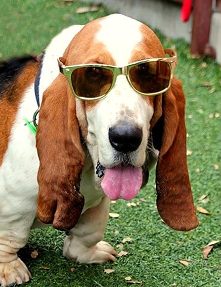 10.29.15 - George & Amal Clooney Adopt Rescue Dog2