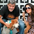 George & Amal Clooney Adopt a Rescue Dog