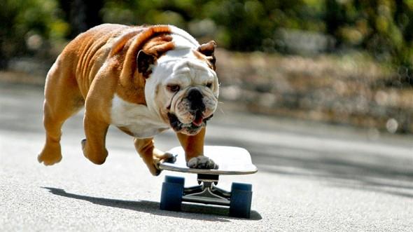 10.29.15 - Skateboarding Dog Tillman Dies3