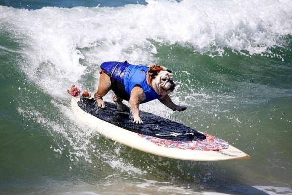 10.29.15 - Skateboarding Dog Tillman Dies4