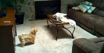Dogs Caught on Film Being Scared by Ghosts