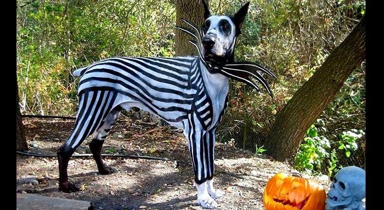 burton tim characters halloween dogs dressed