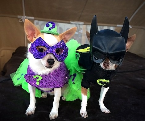 Batman (though the Riddler was from Batman Forever which was not a Tim Burton & Dogs Dressed as Tim Burton Characters for Halloween