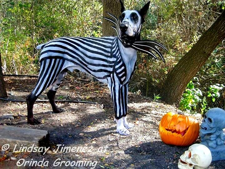 Dogs Dressed as Tim Burton Characters for Halloween