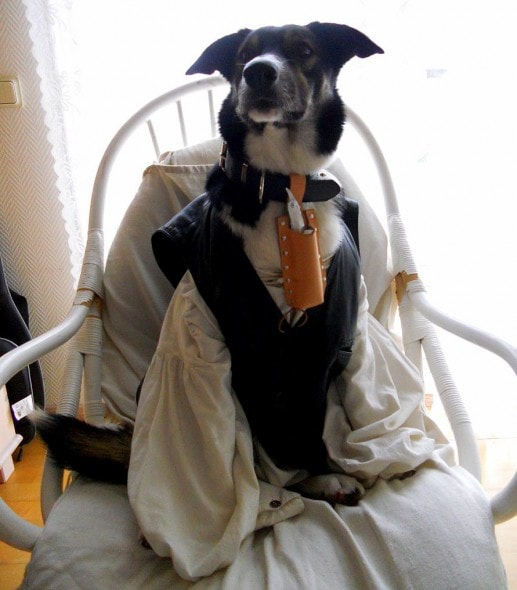 dogs dressed as tim burton characters for halloween life
