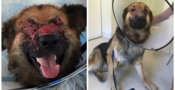 Dog Still Smiling Despite Burn to Eyes from Fire
