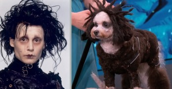 Jimmy Kimmel Canine Halloween Costume Parade