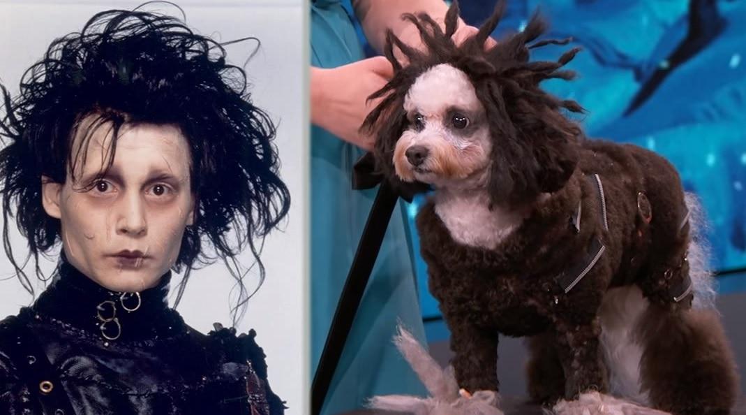 Jimmy Kimmel Canine Halloween Costume Parade