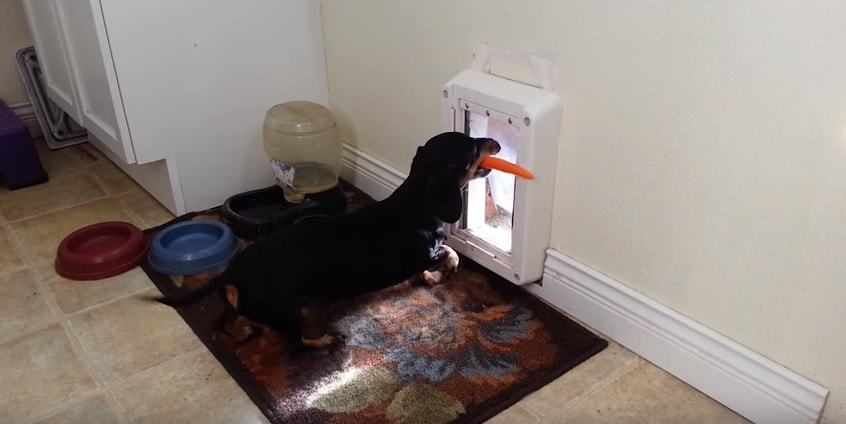 Dog Simply Cannot Figure Out Why This Isn't Working!