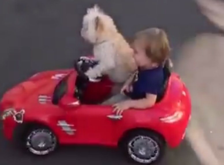 This Dog Can Actually Drive