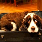 Man Sneaks Dog in Suitcase to See Dying Wife in Hospital One Last Time