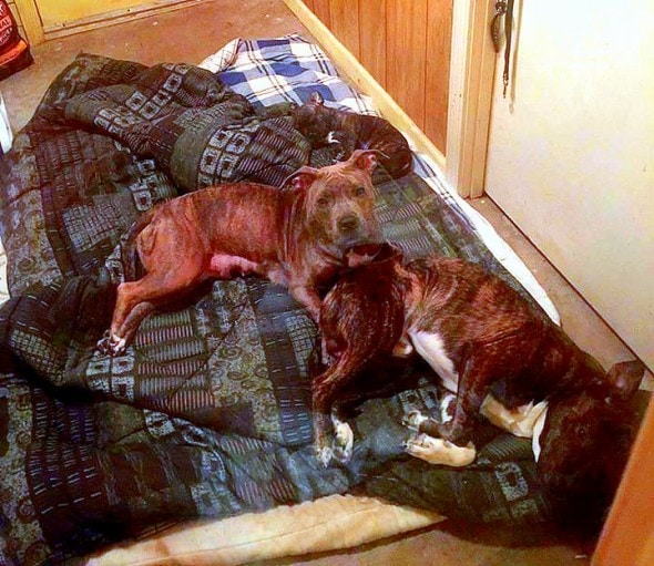 10.9.15 - Dogs Save Family from Flood