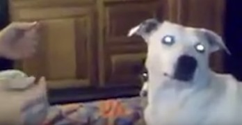 Dog Mystified by Human's Magic Trick