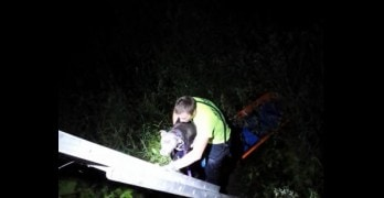 Three Rescue Units Save Dog Tossed in Wetlands