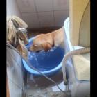 Dog Wants to Swim