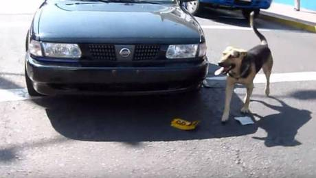 Stray Dog Goes from Menace to Law Enforcer