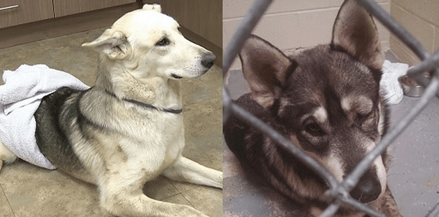 Strangers Come Together to Pay Surgery for Dogs Hit by Train