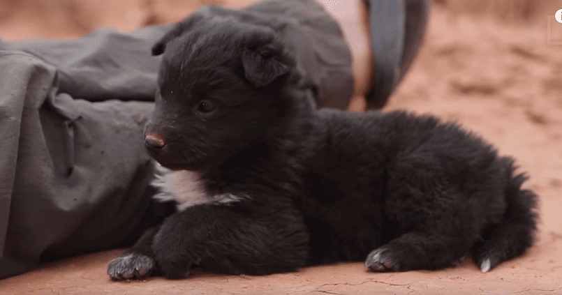Expeditioners Rescue Puppy Rescued from Desert