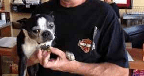 Dog Stolen Five Years Ago Reunites with Owner