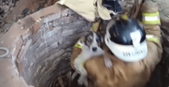 Firefighters Save Shelter Dog That Fell in 26 ft. Deep Well