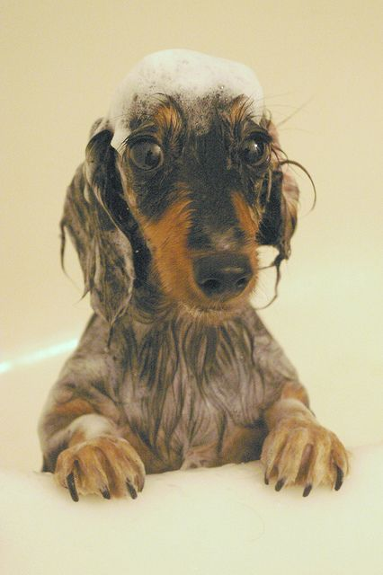 Best Wet Dog Food >> Cute and Not-So-Cute Pictures of Wet Dogs - LIFE WITH DOGS