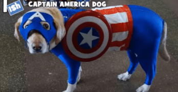 Dogs dressed as super heroes