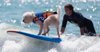 Dogs go Surfing!