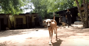 A Starving Dog's Transformation to Healthy Happy Dog