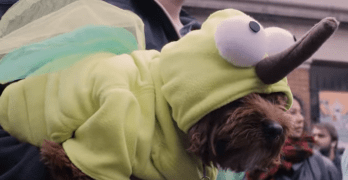 21 Reasons to Dress Up the Dog for Halloween