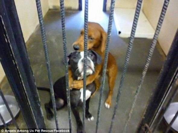 Kala and Keira when scared and alone at the shelter.