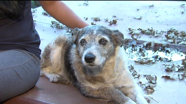 Man Faces Down Hungry Mountain Lion to Save Family Dog