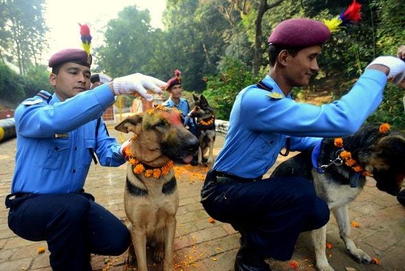 11.10.15 - Kukur Tihar Festival in Nepal11