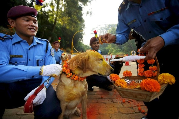 11.10.15 - Kukur Tihar Festival in Nepal13