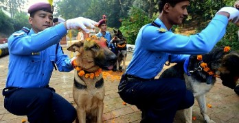 Dogs Are Celebrated in Nepal's Kukur Tahir Festival